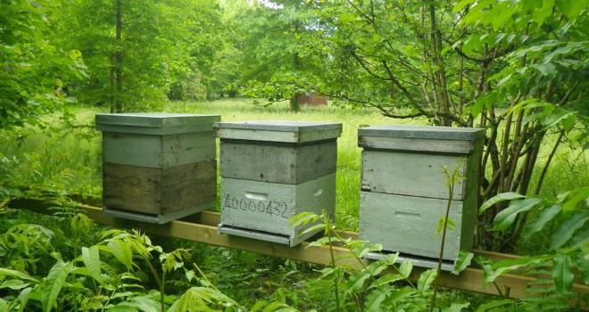Le rucher de La Petite Escalère, 2015. Photo (c) Dominique Palais.