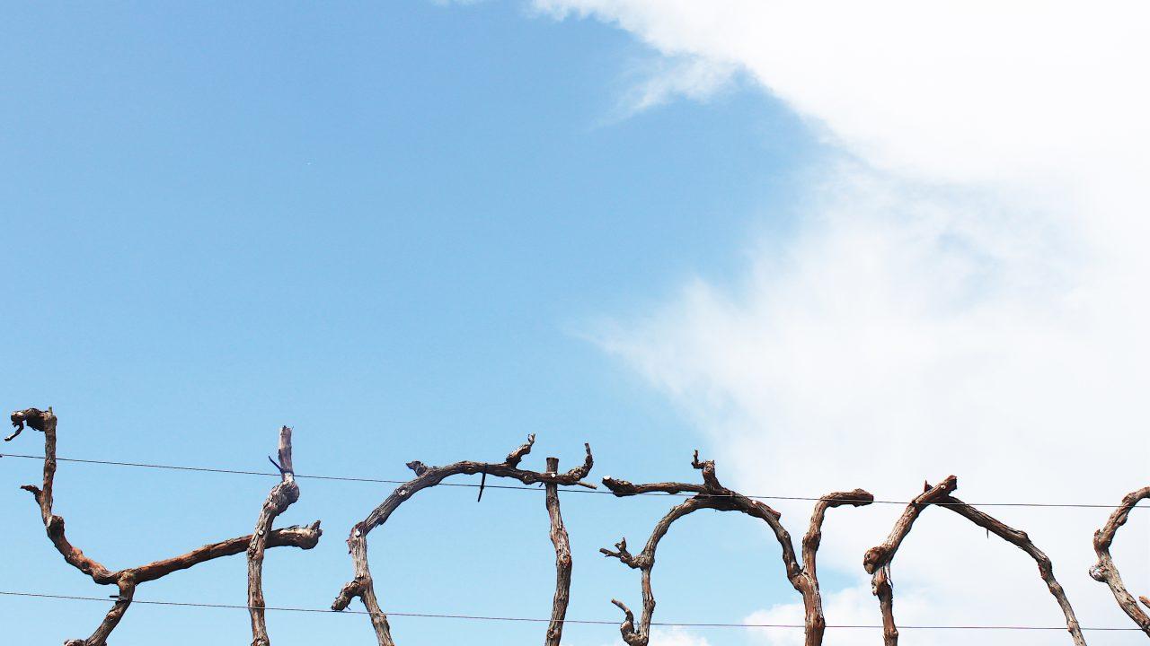 Julie Navarro, Dissoudre le paysage, 2018, détail, ceps de vignes, 11 m x 0,4 m x 0,7 m, Domaine de Suriane.